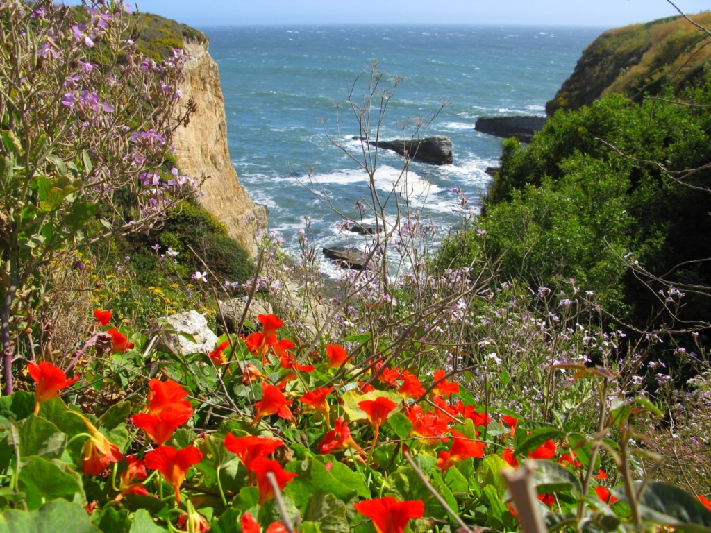 Cliffs and Flowers on the Pacific Coast