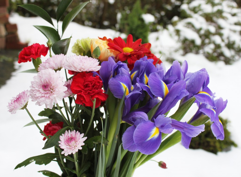 Flowers in Sno