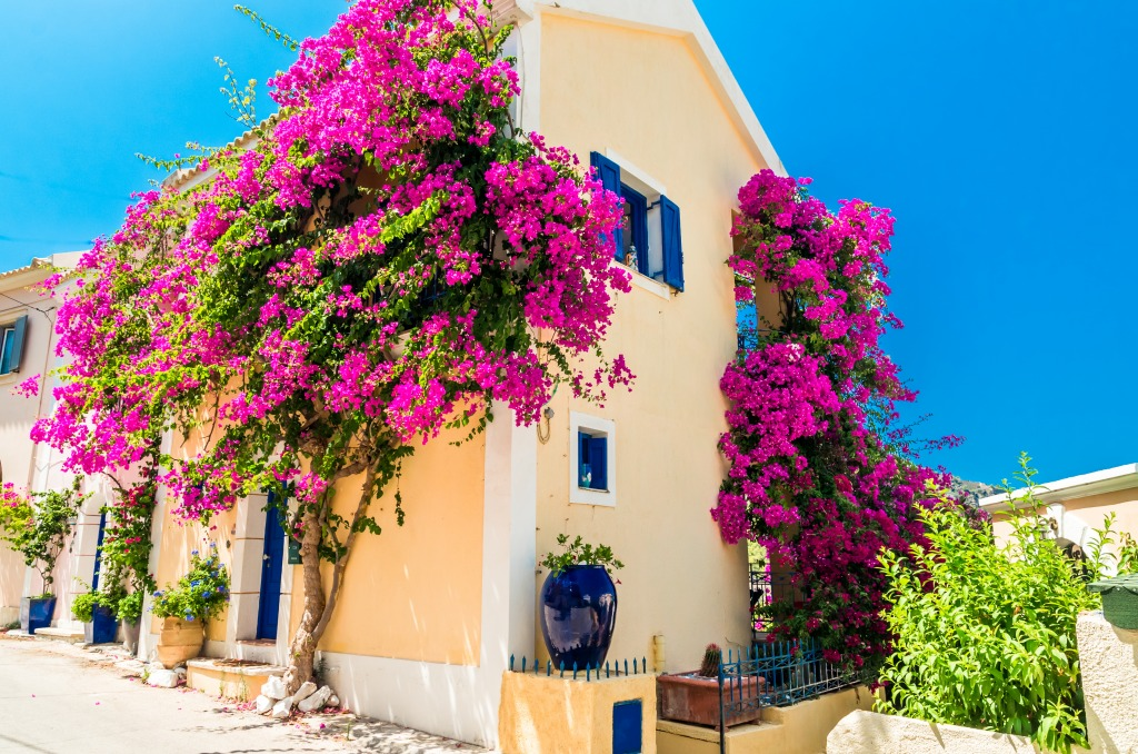 Greek House with Flower