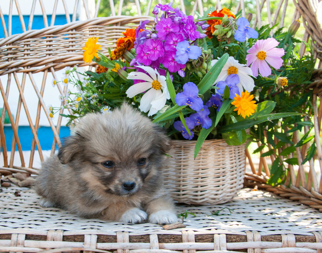 Puppy Sitting by the Flower Basket
