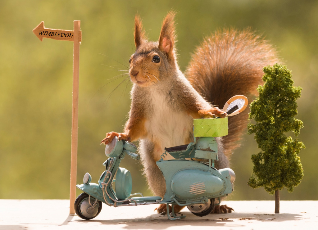 Red Squirrel with a Motorbik