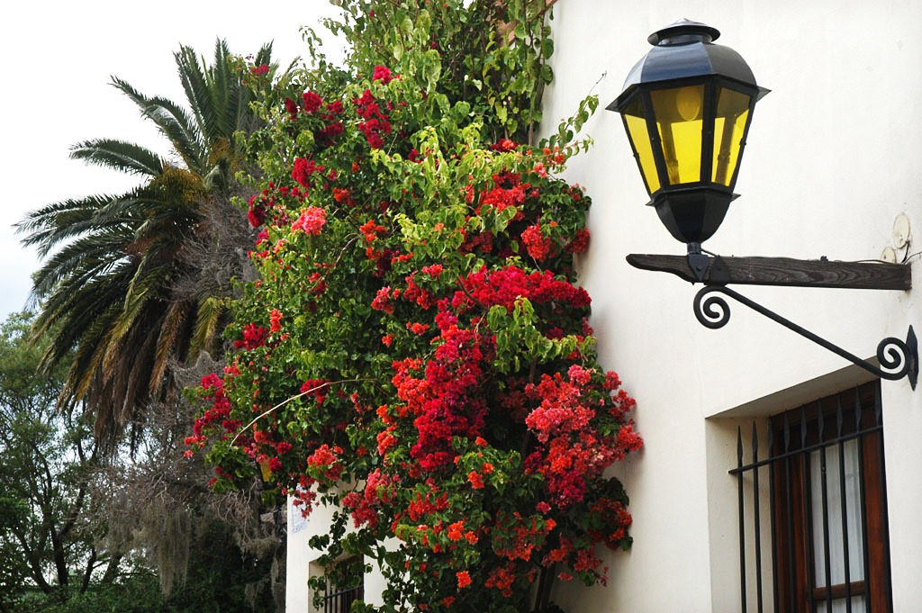Street Light and Flowers, Uruguay